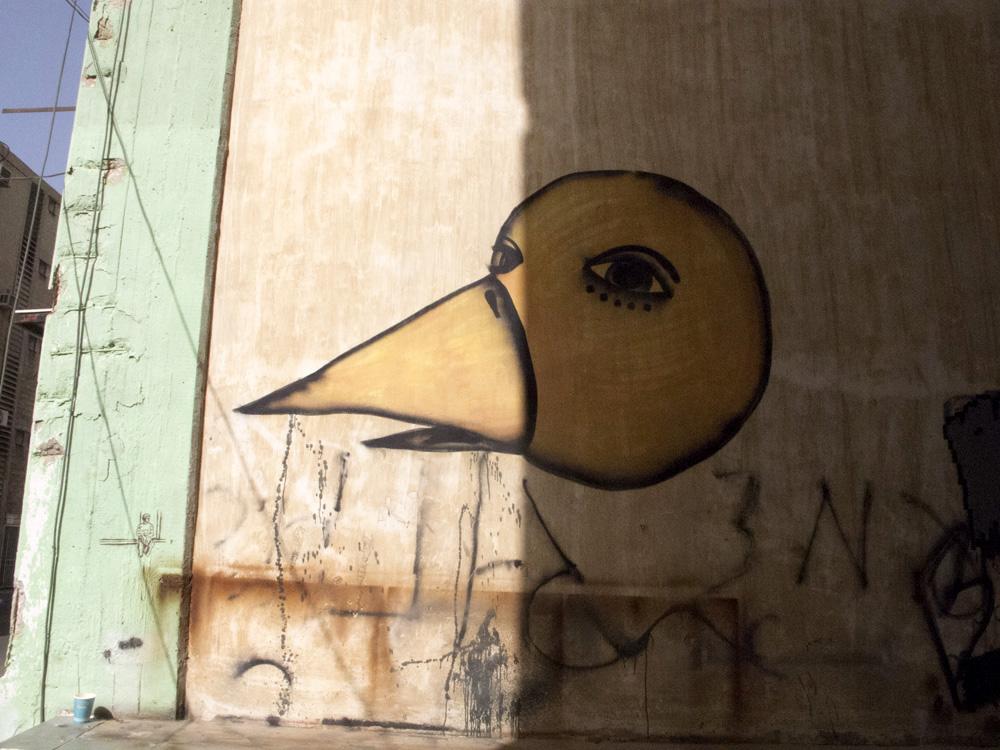 graf bird