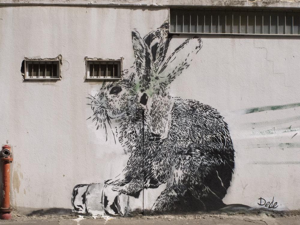 rabbit graf